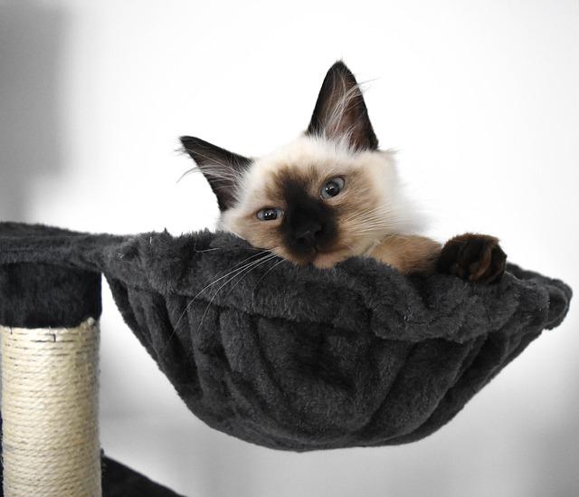 dormir arbre a chat