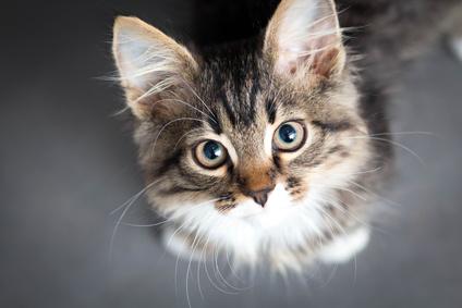 chat fontaine à eau