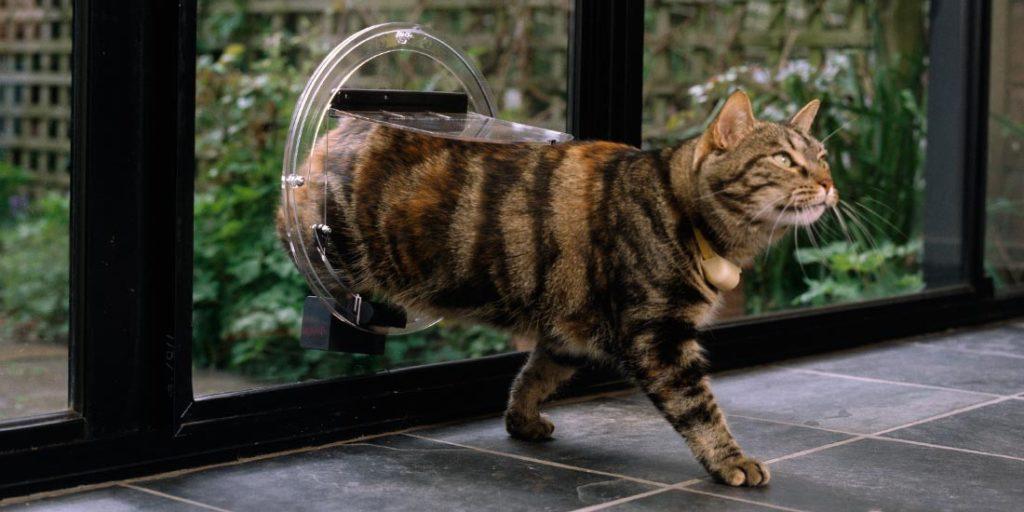 chatière chat