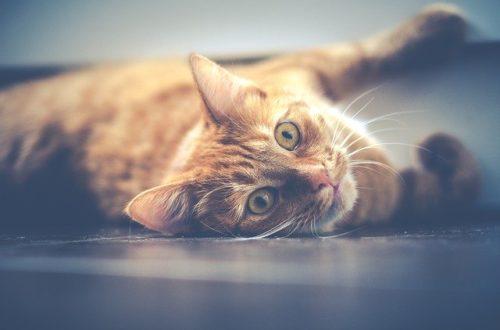 chat santé