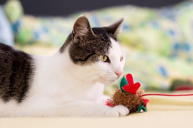 jeux chat jouet pour chat