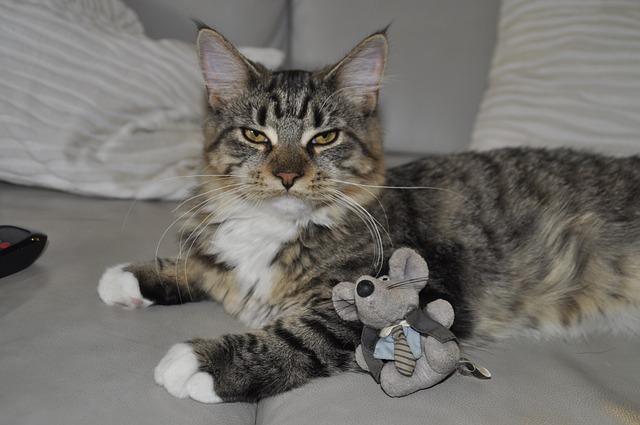 jeux chat jouet chat souris