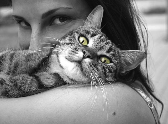 jouet chat complicité