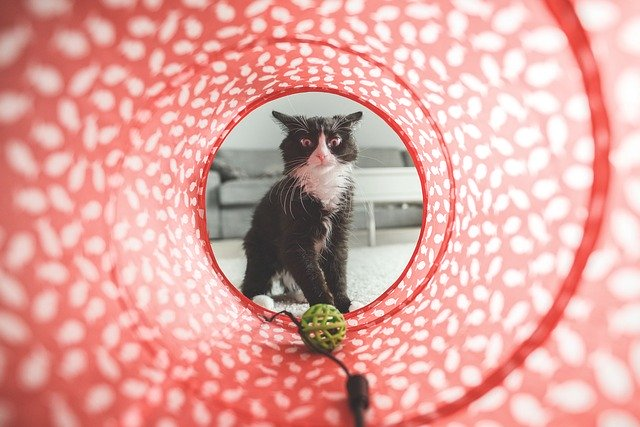 jeux chat jouet chat