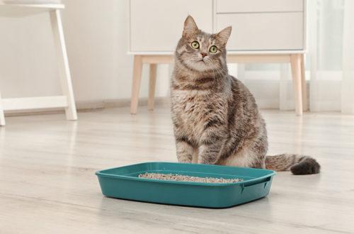 eduquer chat litière sans odeur