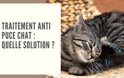 Traitement anti puce chat : meilleure solution efficace