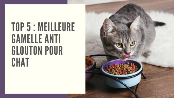 acheter gamelle anti glouton chat anti vomissement chat