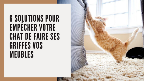solutions pour empêcher chat faire ses griffes canapé meubles