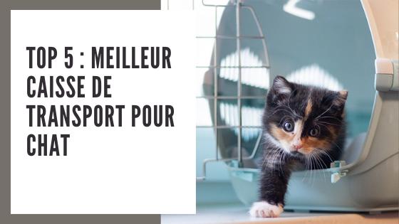 Top 5 : meilleur caisse de transport chat