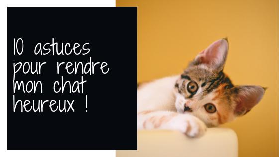 conseil pour rendre votre chat heureux